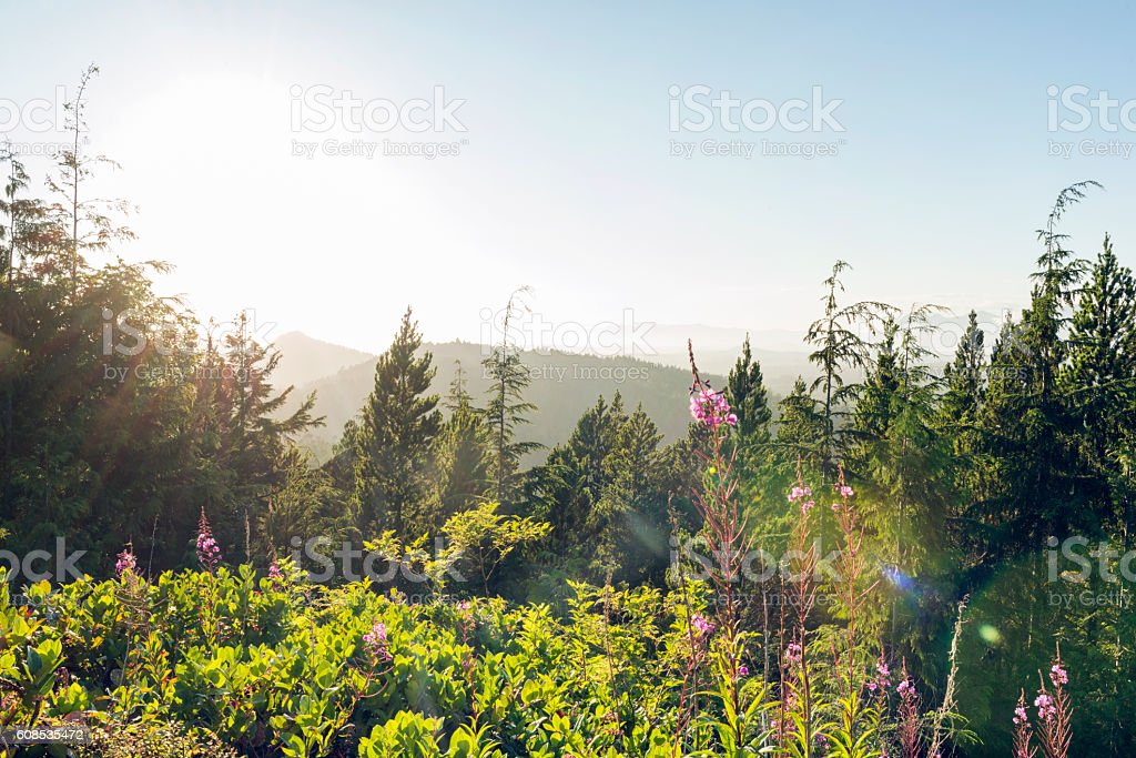 Scenic Mountain Top Landscape View Pacific Rim National Park Canada stock photo