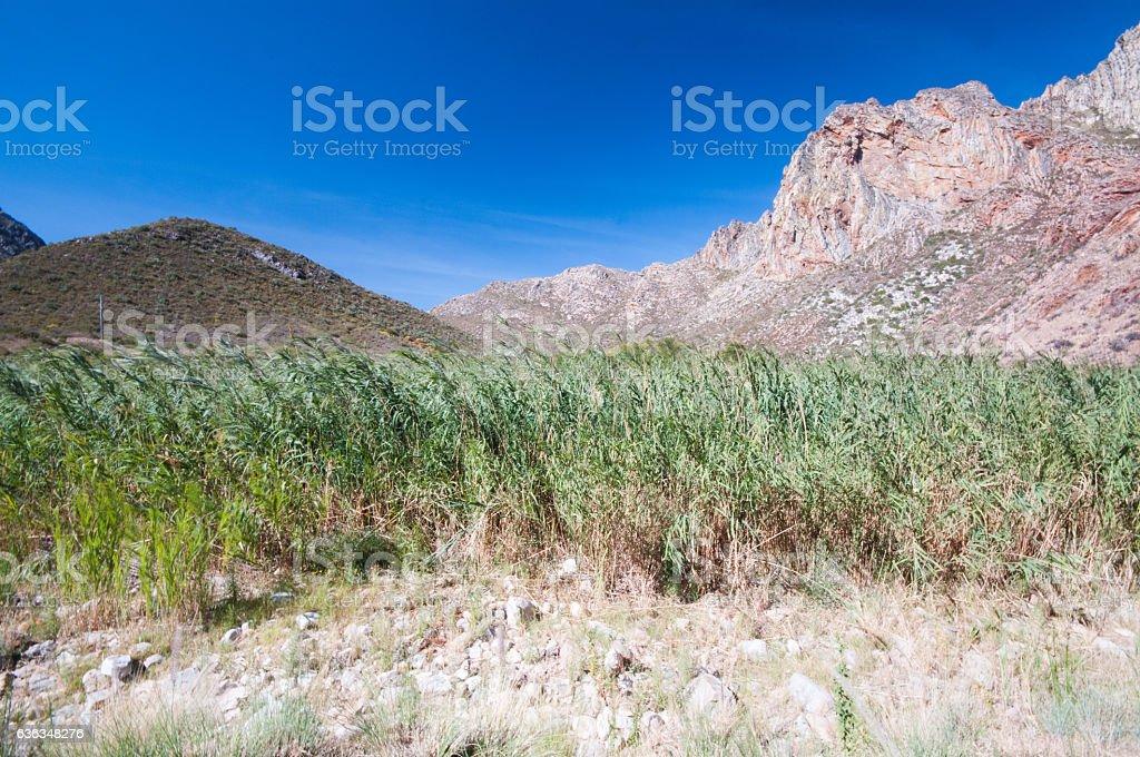 Scenic near Montagu, South Africa stock photo