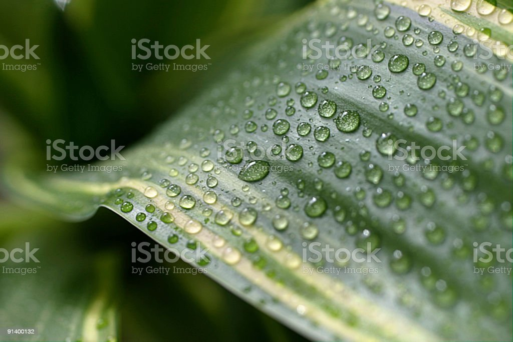 scenic of the leaf royalty-free stock photo