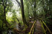 Scenic pathway of Ang Ka nature trail Doi Inthanon