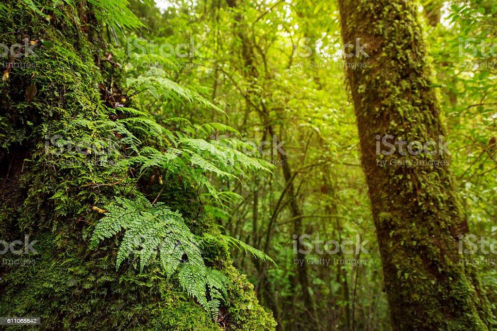 Scenic pathway of Ang Ka nature trail Doi Inthanon stock photo