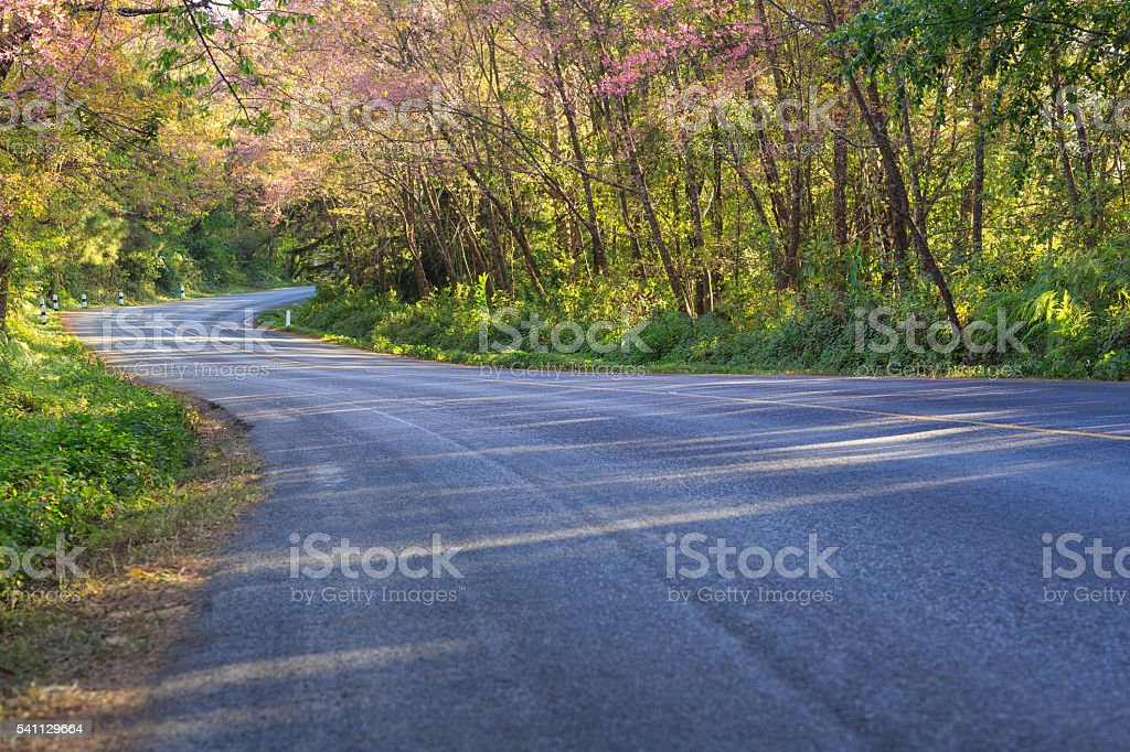 Scenic road with cheery blossom stock photo