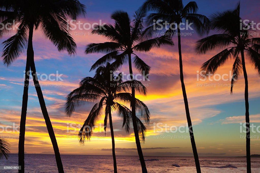 Scenic Sunset with Coconut Palm Trees in Kauai Hawaii stock photo