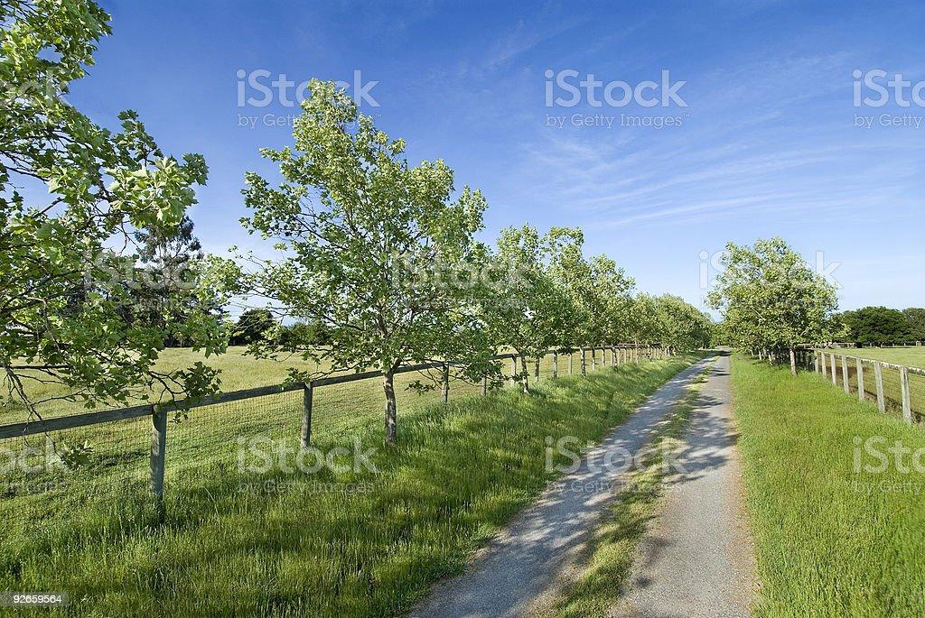 Vista panorámica de los árboles carretera de tierra foto de stock libre de derechos