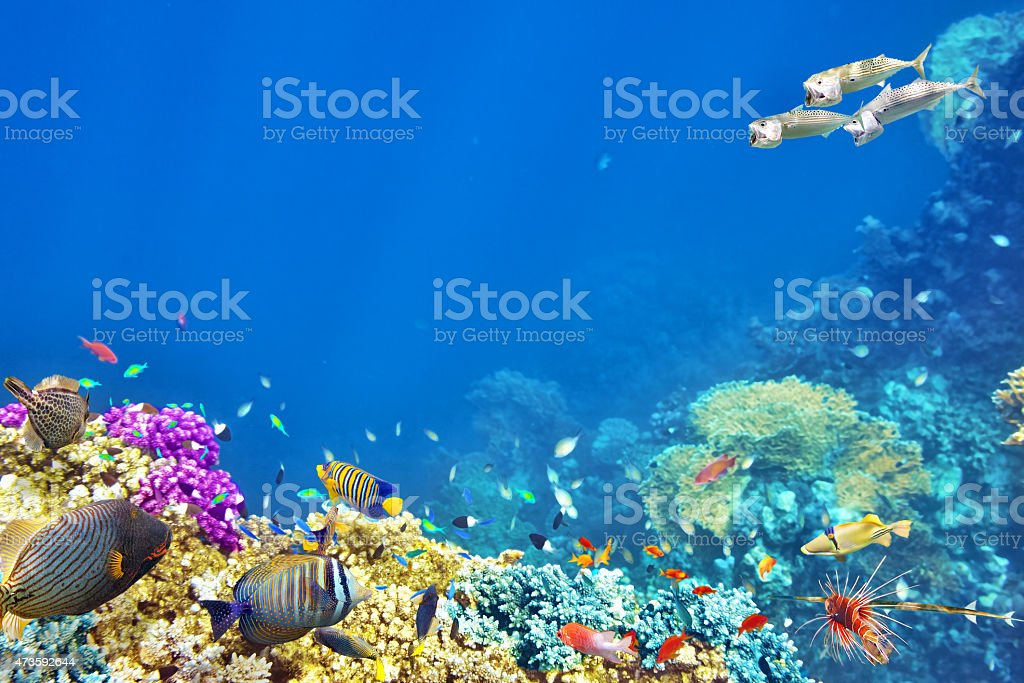 Scenic underwater world of colored coral and tropical fish stock photo