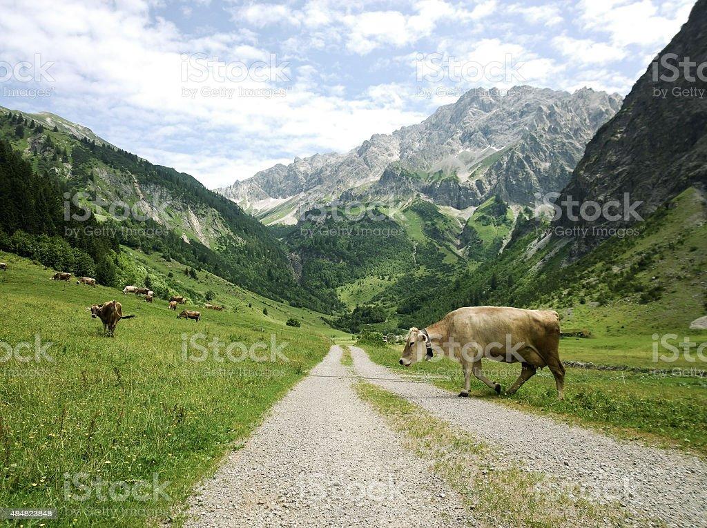 Scenic Valley (Gro?es Walsertal / Vorarlberg / Austria) stock photo