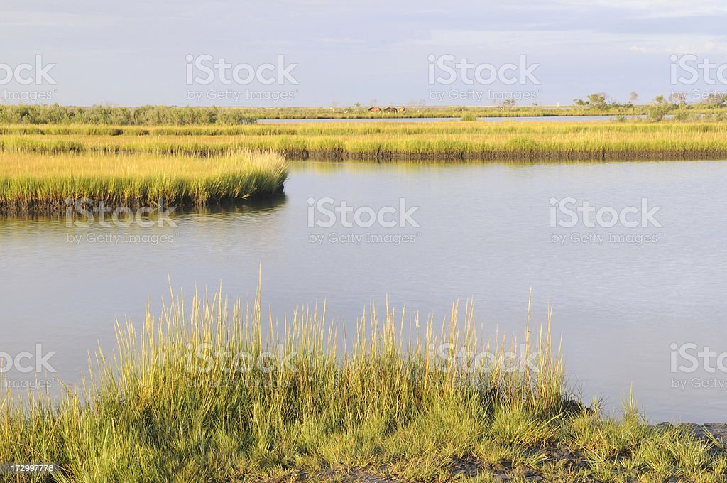 Scenic View at Assateague Island royalty-free stock photo