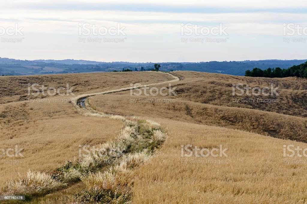 Scenic view of a path through a field stock photo