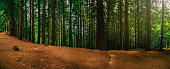 Scenic view of a redwood forest