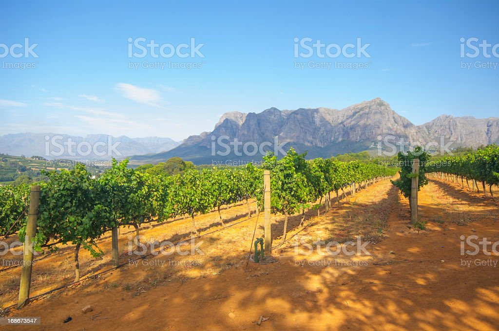Scenic view of a vineyard in Stellenbosch, South Africa stock photo