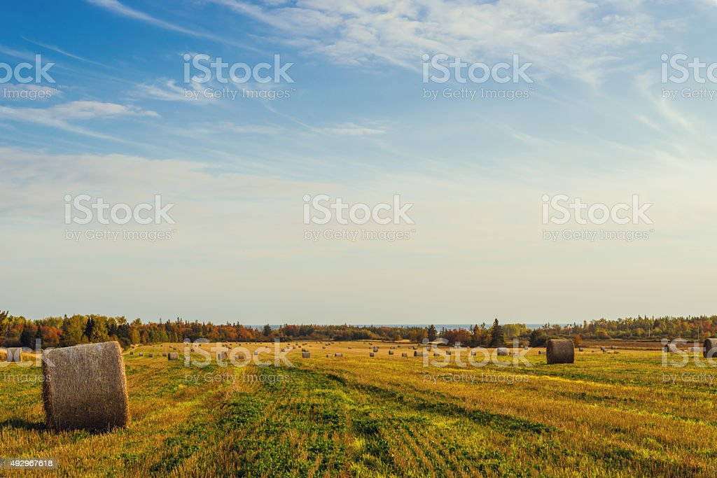 Scenic view of hay stacks at fall stock photo