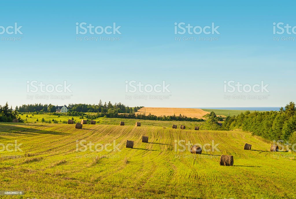 Scenic view of hay stacks on sunny day stock photo