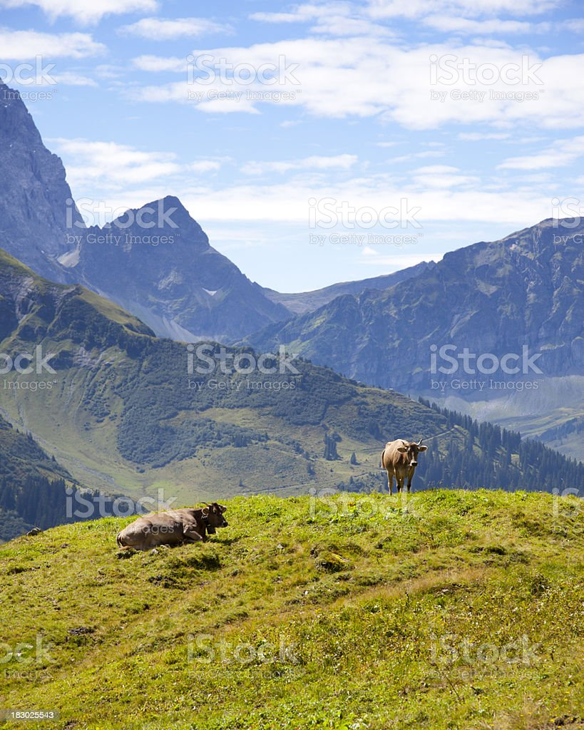 Scenic View of Swiss Mountain Peaks with Cows royalty-free stock photo