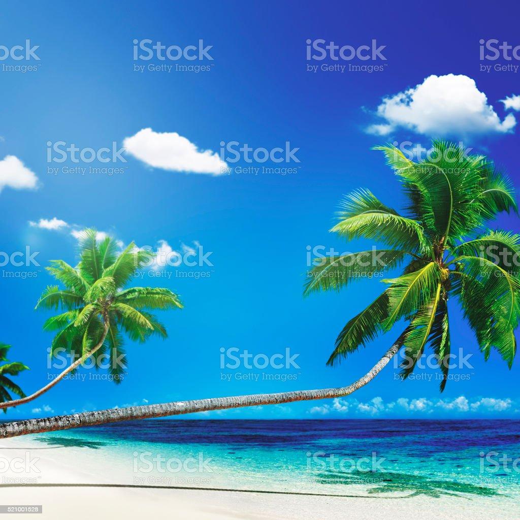 Scenic View Sea Shore Sand Coconut Palm Trees Concept stock photo