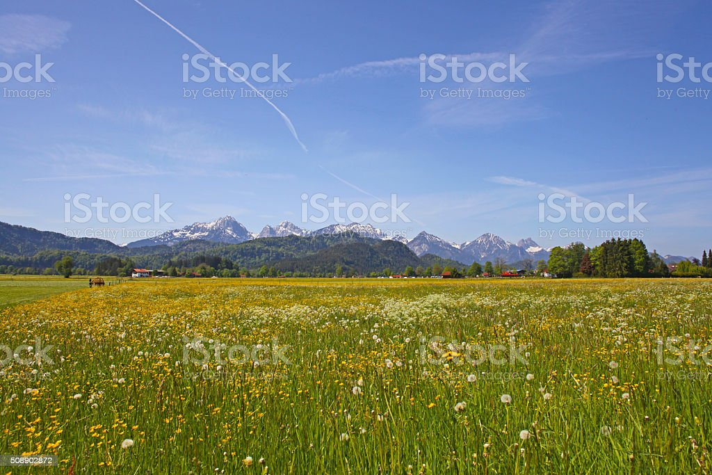Scenic view with blossoming field stock photo