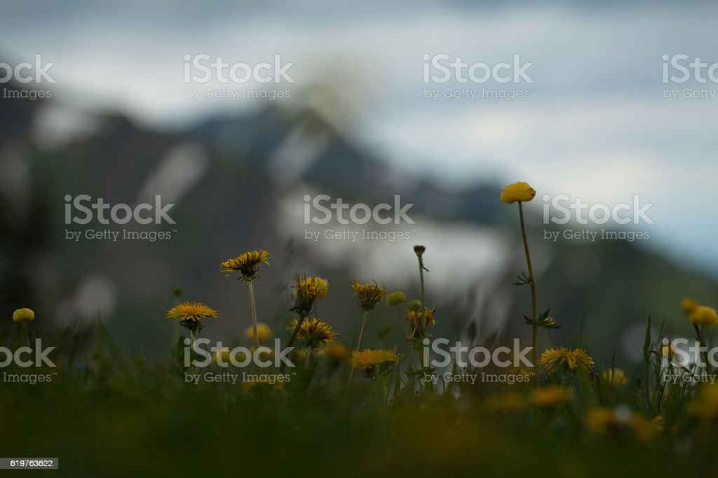Scenic view with dandelions in spring stock photo