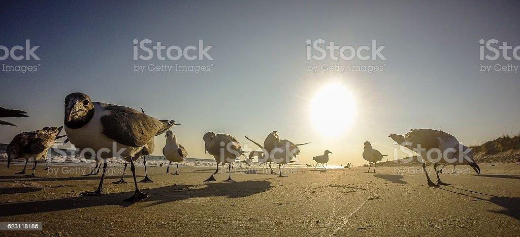 scenic views at oak island beach north carolina stock photo