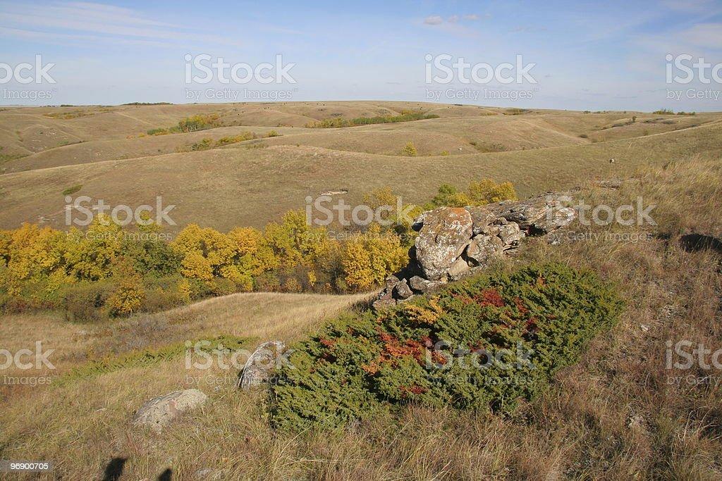 Scenic with Creeping Cedar royalty-free stock photo