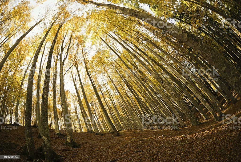 Scenics Autumn Forest high view in the mountain - fish-eye royalty-free stock photo