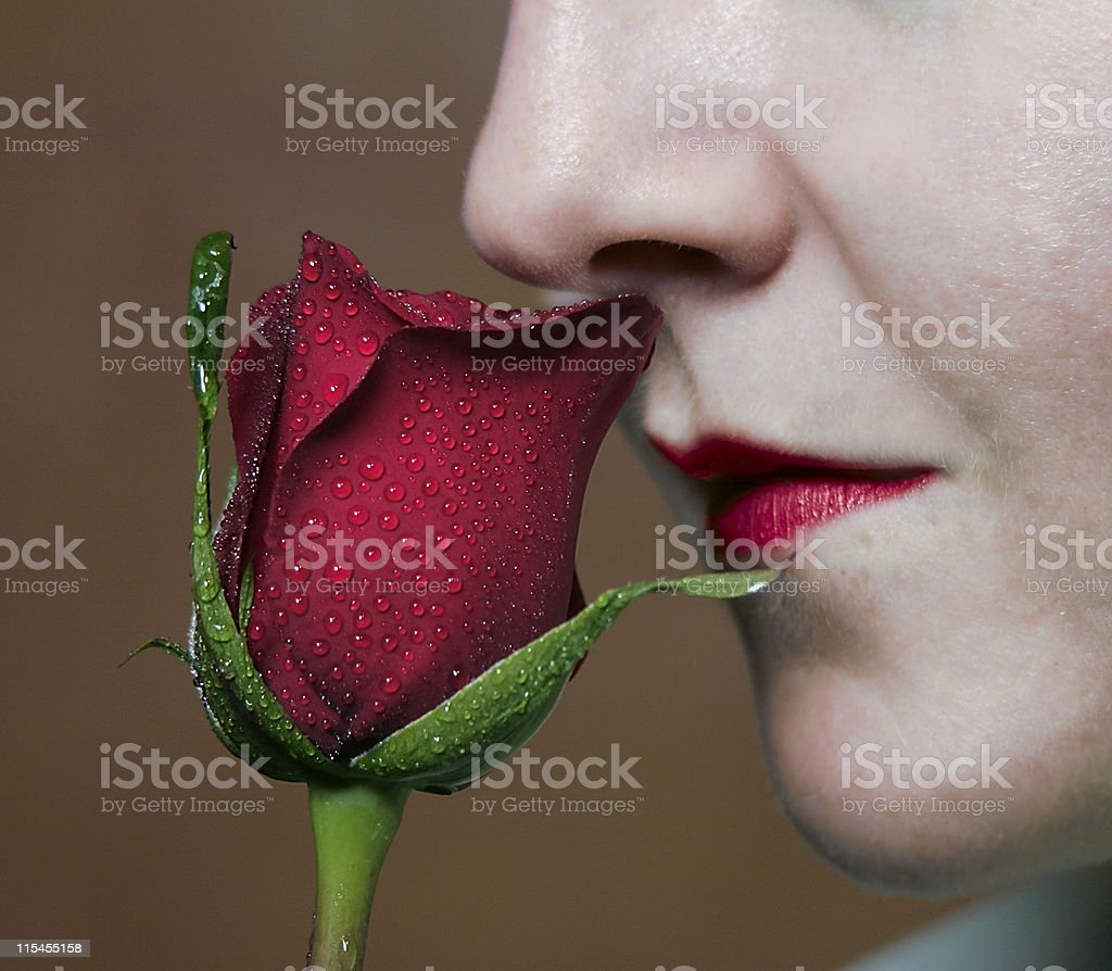 Scent of a Rose royalty-free stock photo