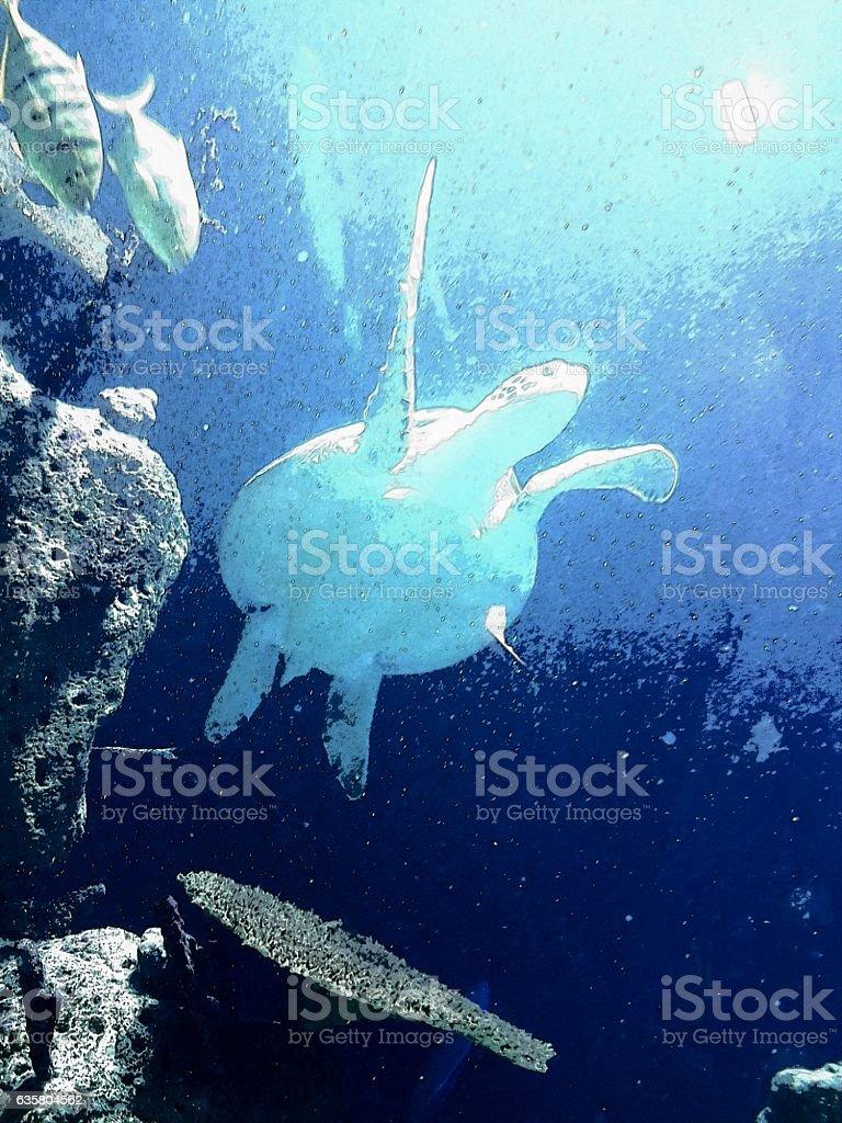 schildkröte stock photo