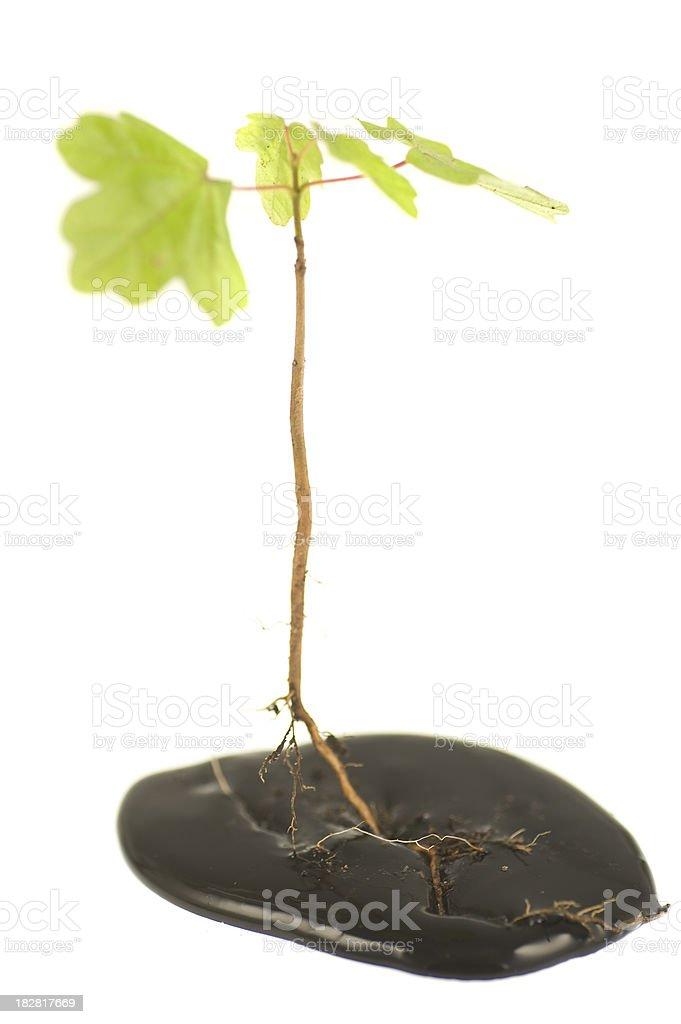 schlechte Wurzeln - plant bad oil roots in dark liquid royalty-free stock photo