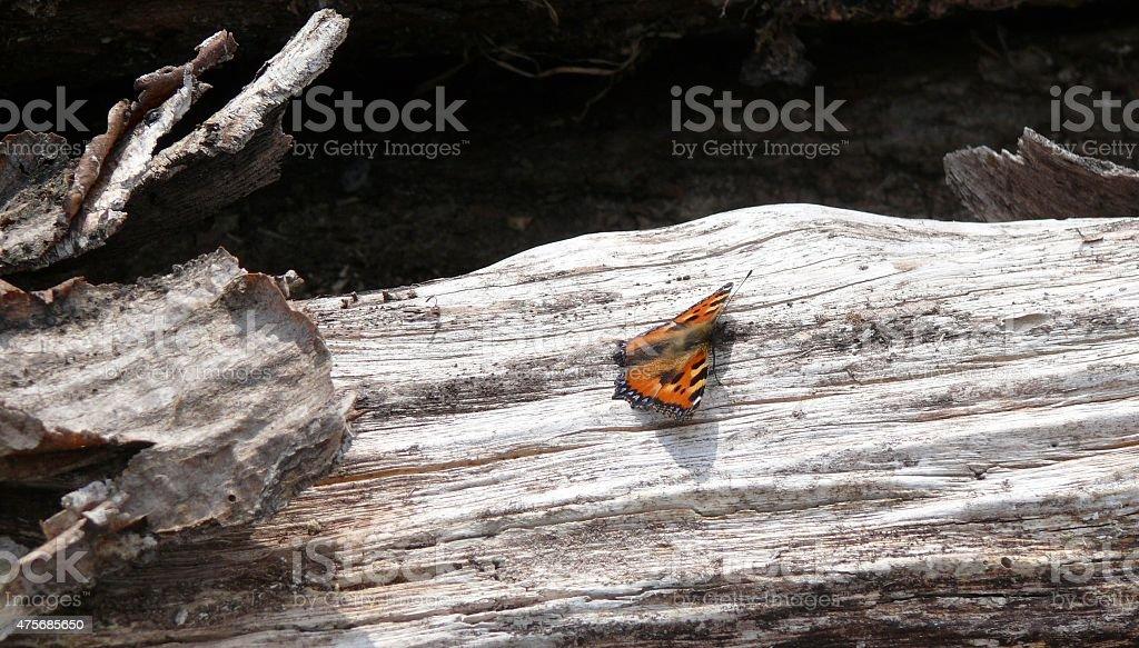 Schmetterling auf Holz royalty-free stock photo