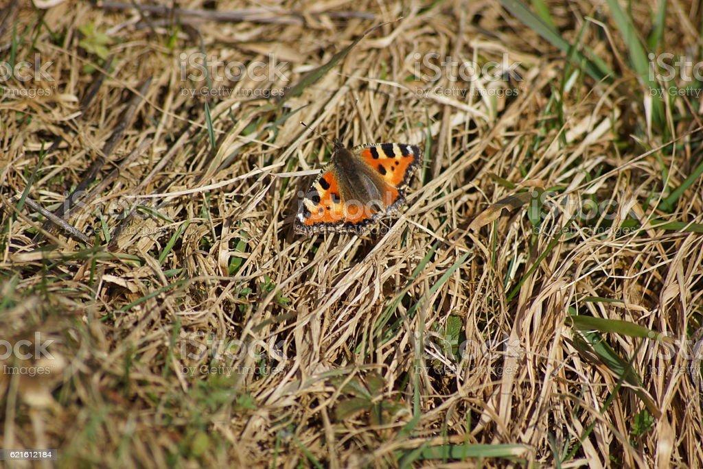 Schmetterling im Frühling stock photo