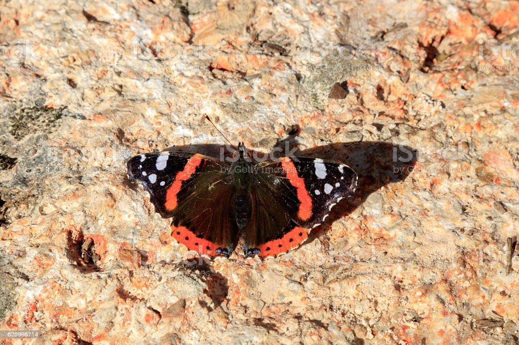 Schmetterling in der Sonne stock photo