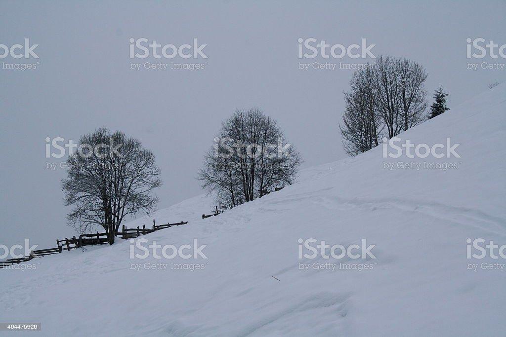 Schneelandschaft mit B?ume royalty-free stock photo