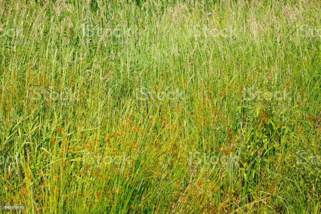 SchoenebeckWald16jHB103.JPG stock photo