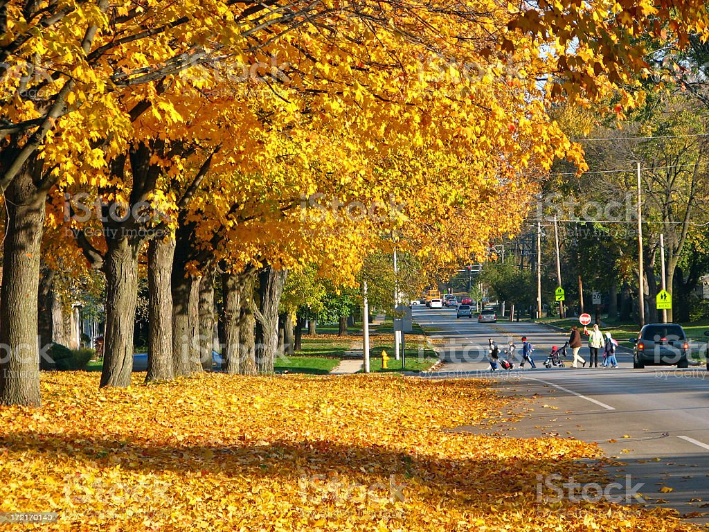 School Children Crossing Street in Autumn stock photo