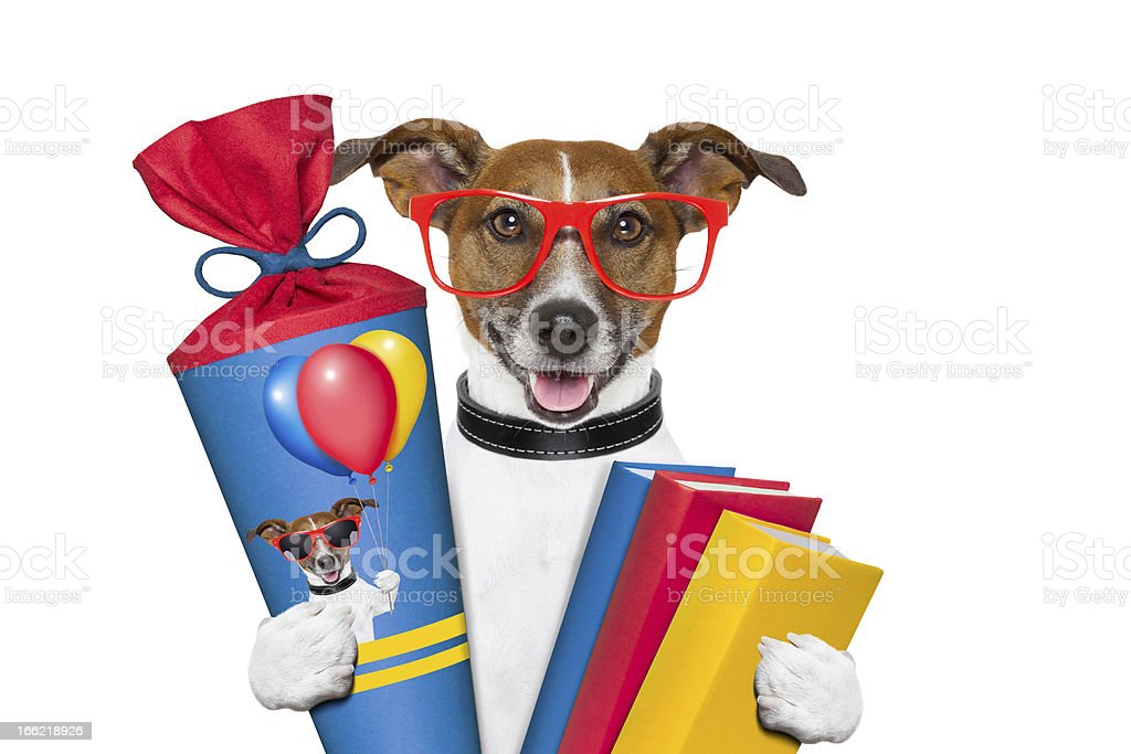 school dog royalty-free stock photo