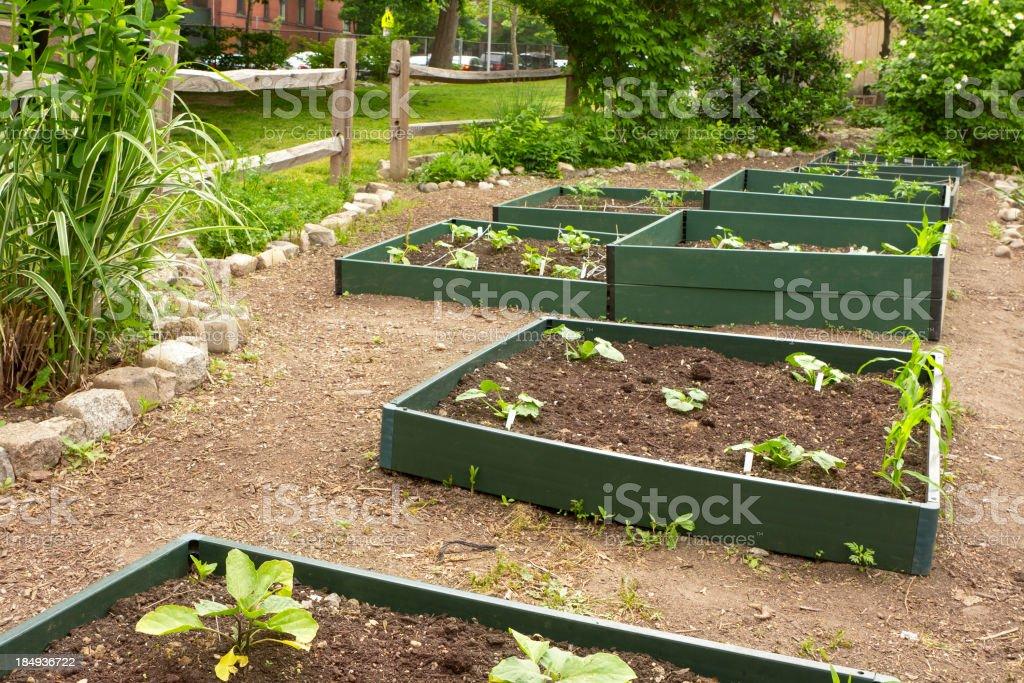 School garden royalty-free stock photo