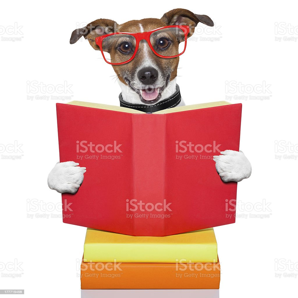 school learing dog royalty-free stock photo