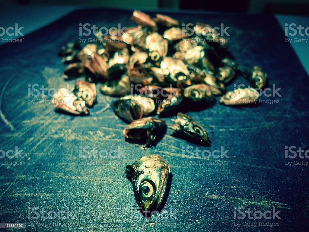 School of dead fish royalty-free stock photo