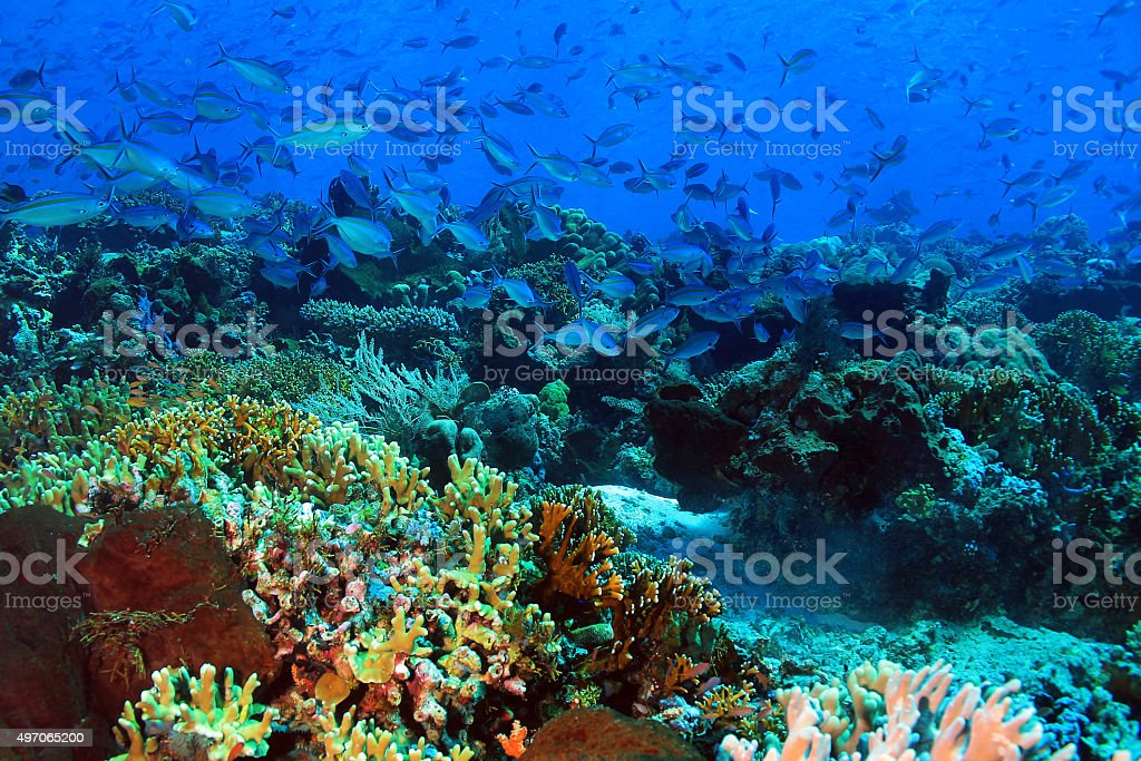 School of Fish over Coral Reef stock photo