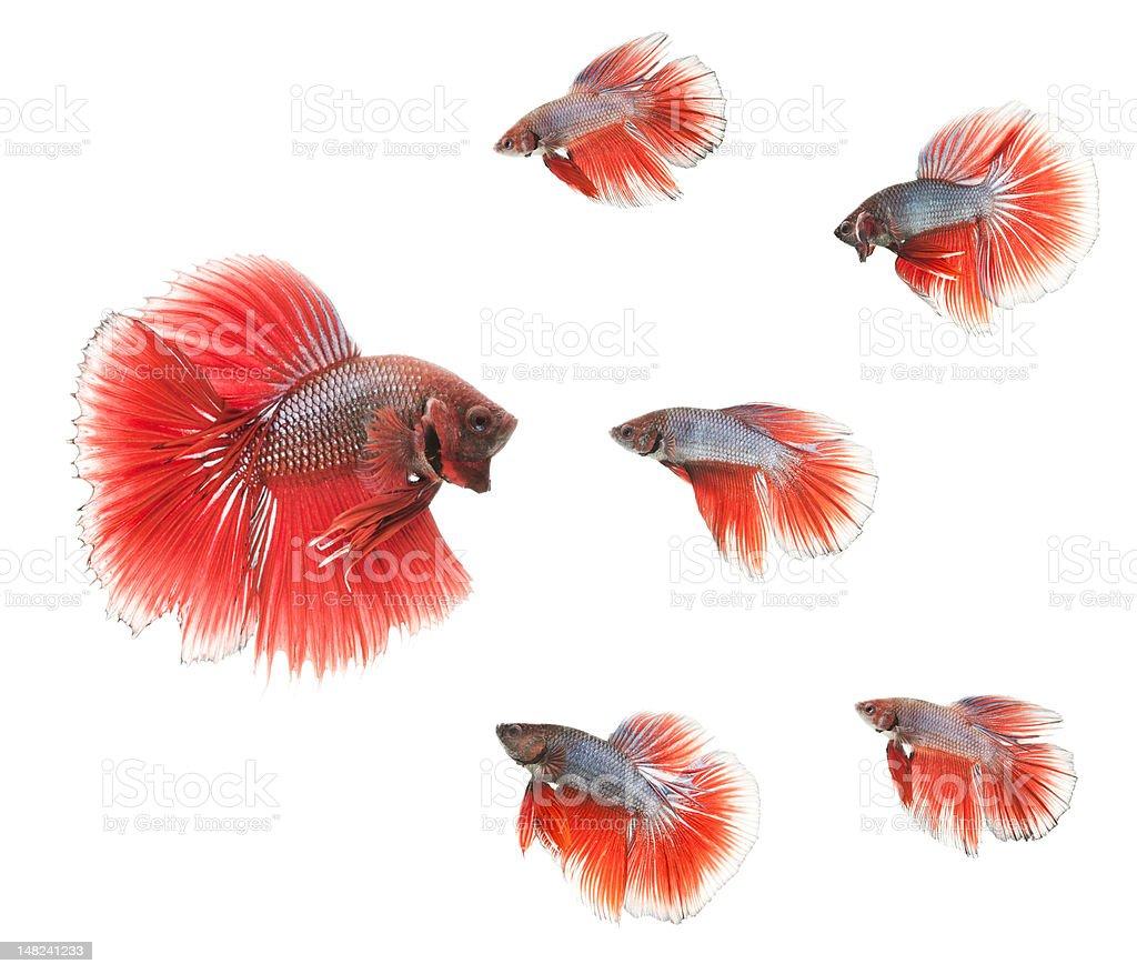 school of fish royalty-free stock photo