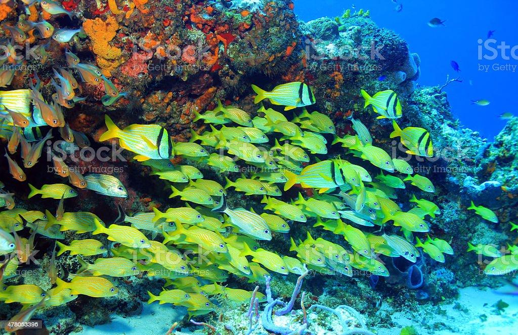 School of Fish stock photo