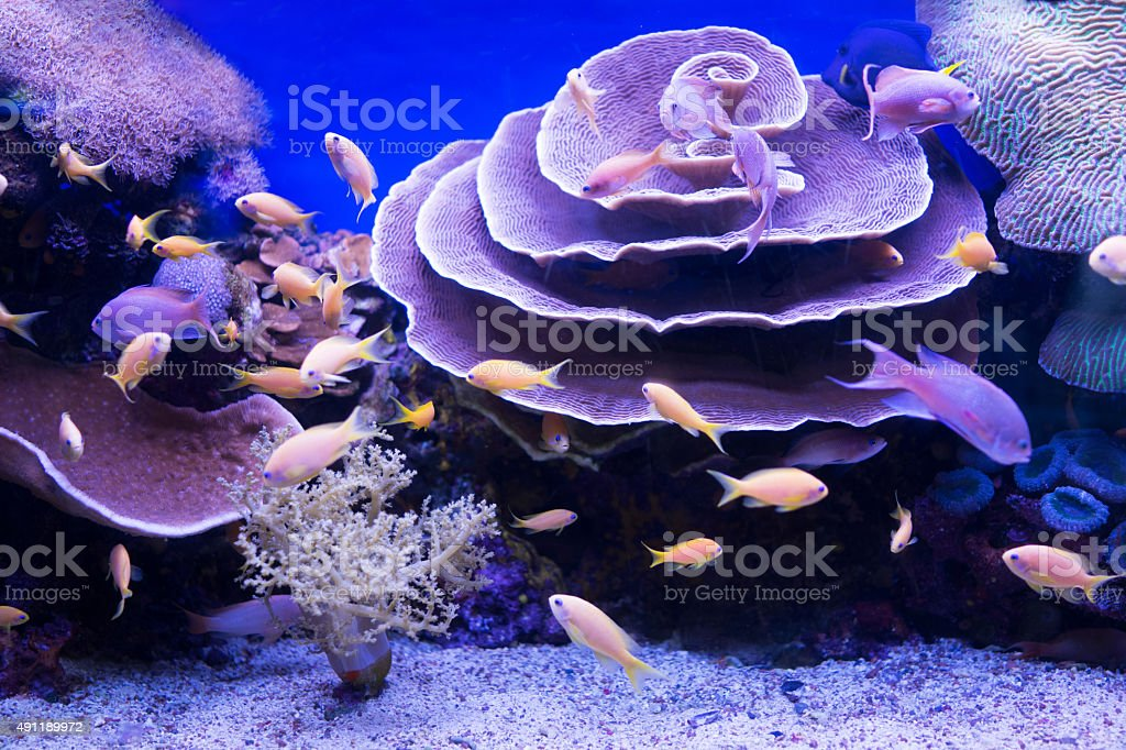 School of fish with beautiful corals. stock photo