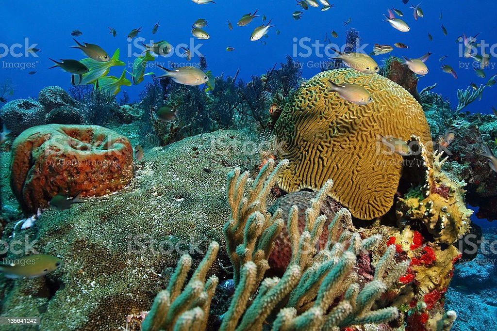 School of Small Fish on a Coral Reef - Cozumel stock photo