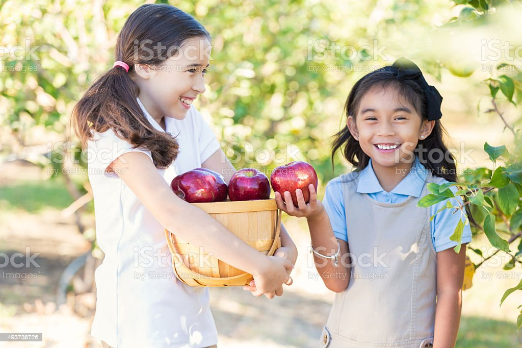 Schoolgirls picking apples in orchard during field trip stock photo