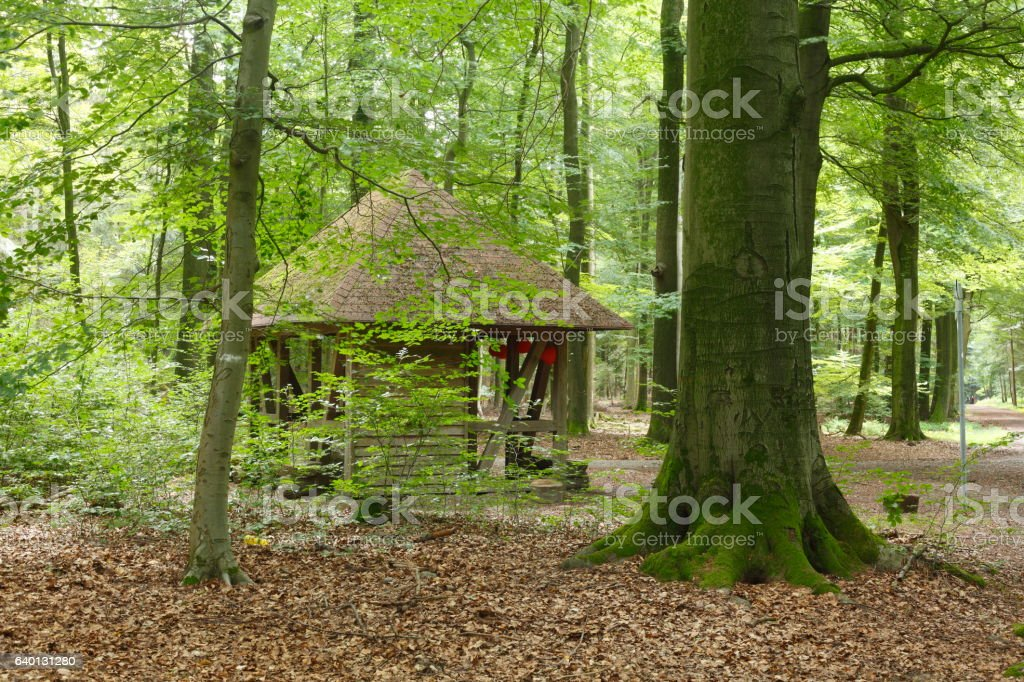 Schutzhütte, Laubwald, Bäume stock photo