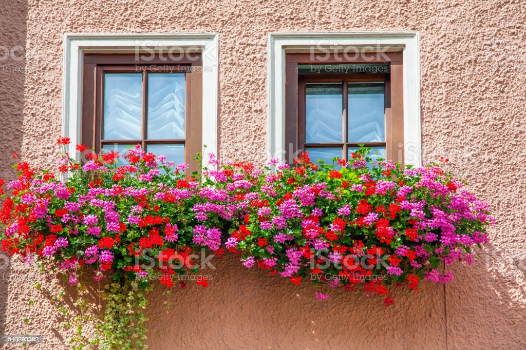 schwarzwald germany windows of the house with flowers stock photo