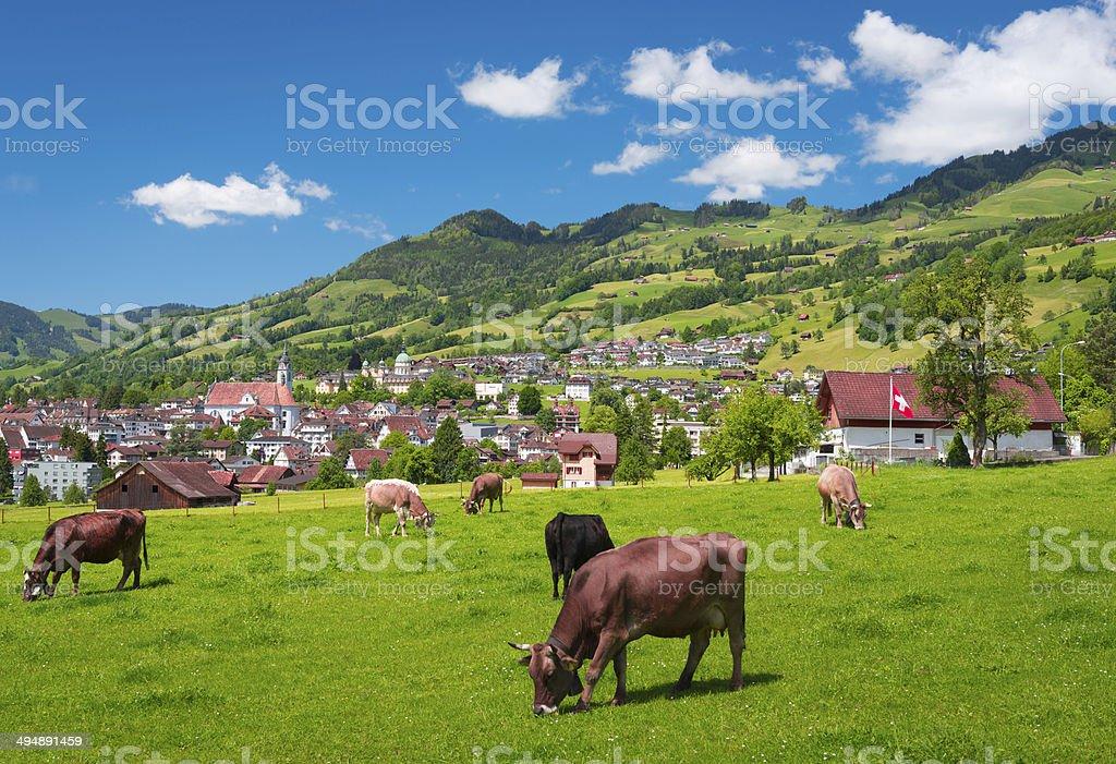 Schweiz. Alpine Meadows. stock photo