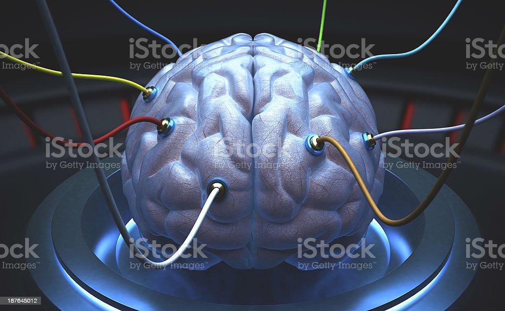 Science Brain royalty-free stock photo