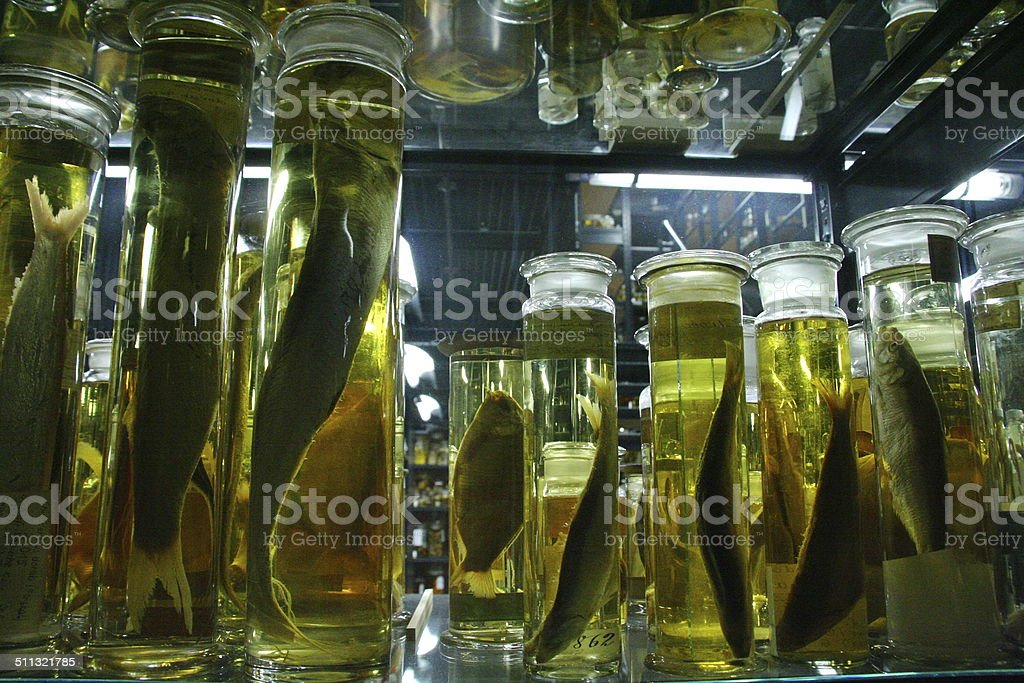 Science Jars of Formalin And Animals stock photo