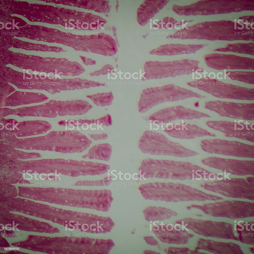 science medical anthropotomy physiology microscopic human small stock photo