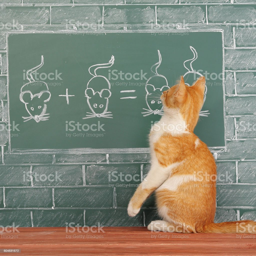 Scientific Cat stock photo