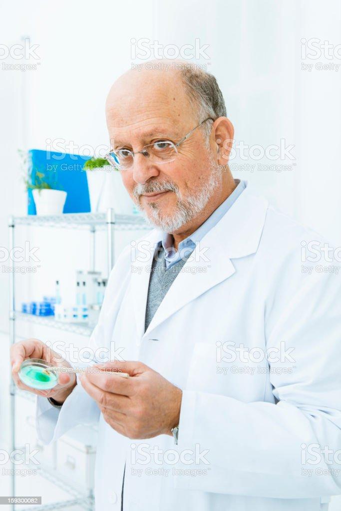 Scientific investigator holding petri dish royalty-free stock photo
